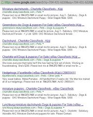 [August 3, 2013 Google Ads for Puppies and Hedgehogs for Sale]